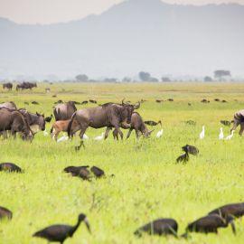 Mindfulness reizen door Tanzania 10