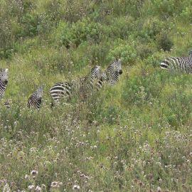 Mindfulness reizen door Tanzania 26