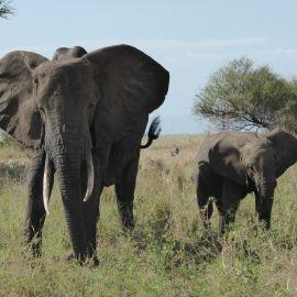 Mindfulness reizen door Tanzania 22