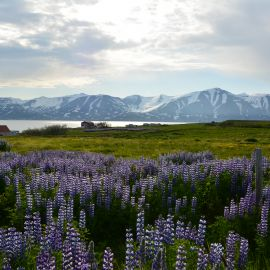 Yoga op IJsland 2