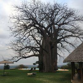Mindfulness reizen door Tanzania 37
