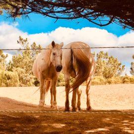 Yoga & Detox in de Algarve 18