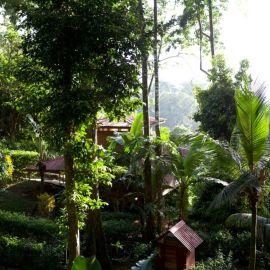 Yoga in Costa Rica 19