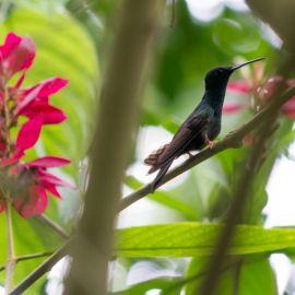 Yoga in Costa Rica 11